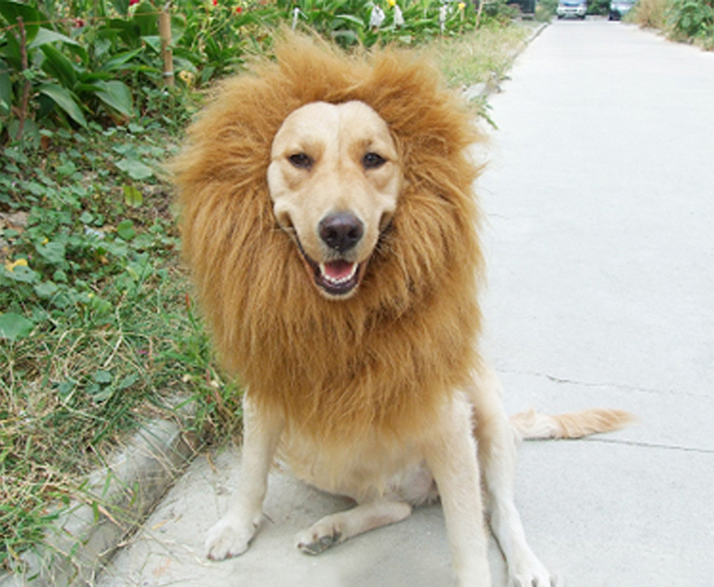 Funny - Dog vs Lion