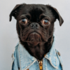 viral-content-example-dog-image