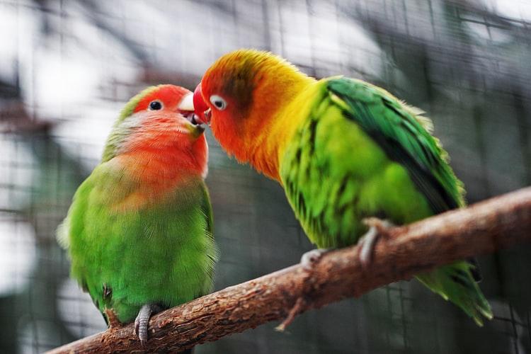 usne-kaha-romantic-sad-hindi-love-poem